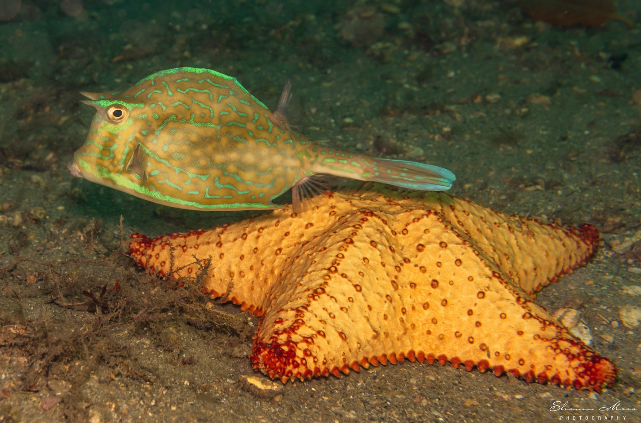 Neon colored fish by starfish on ocean floor