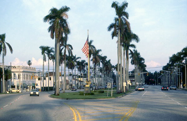 Lines of palm trees along Royal Poinciana Way in Palm Beach Florida