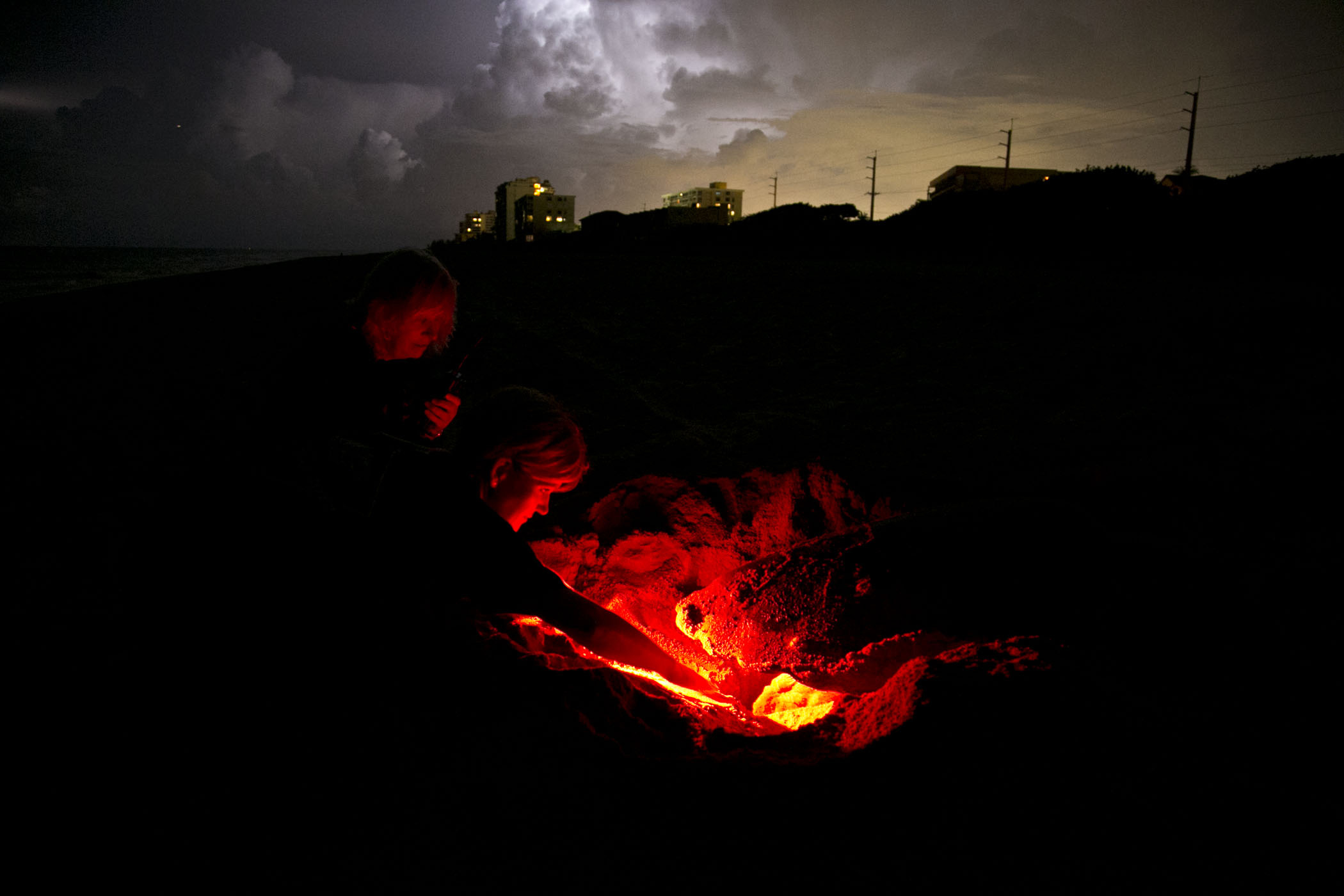 Staff examine nest with red light while sea turtle lays eggs in dark