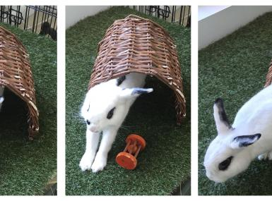 Miss Thing is a pure white domestic rabbit with kohl-black around the eyes