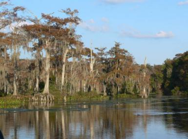Cypress trees with blue sky on water's edge