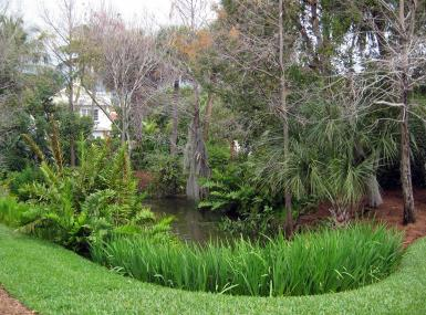 Pond with native water plants and trees in Pan's Garden Palm Beach Florida