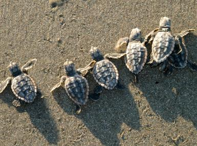 Today's Turtle Tuesday