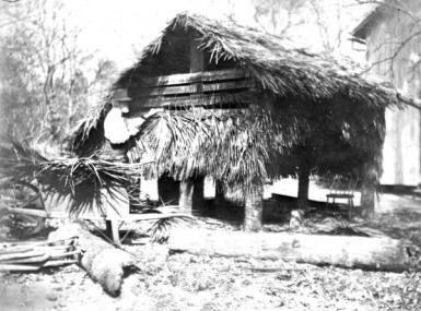 Gray bearded man works on small house of palm fronds on stilts circa 1895