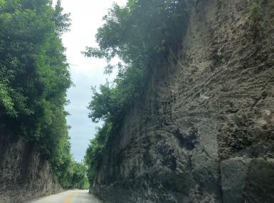Coral rock walls covered in green shrubs tower over narrow road