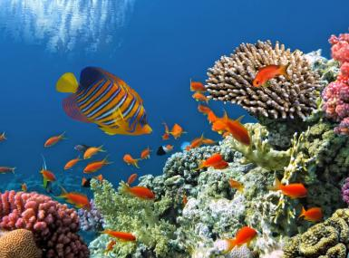 Living coral reef in ocean with colorful tropical fish