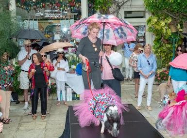 Photo of large black and white pig in pink tutu on fashion show stage