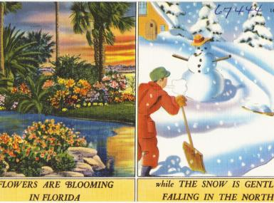 1930s illustrated postcard flowers blooming in Florida next to winter blizzard and snowman