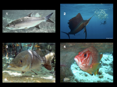 Collage of four saltwater game fish in ocean