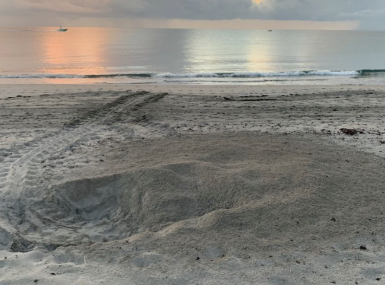 Turtle tracks in sand and flat ocean at sunrise